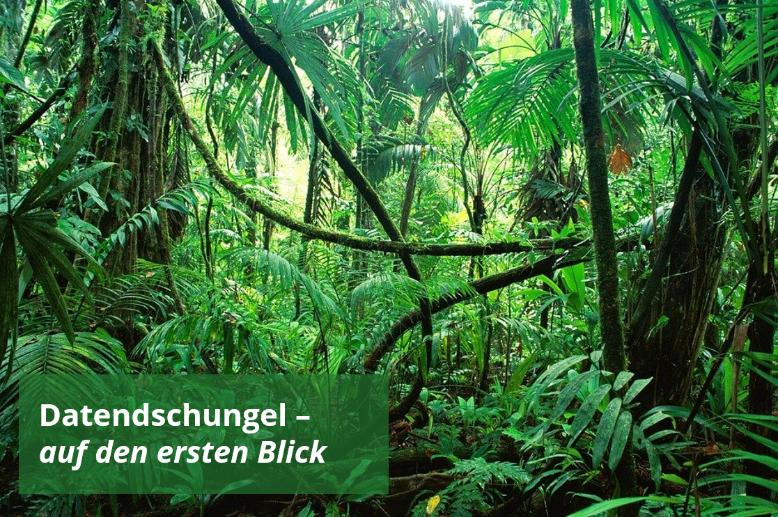 Dichter Dschungel, unwegsames Geländer.