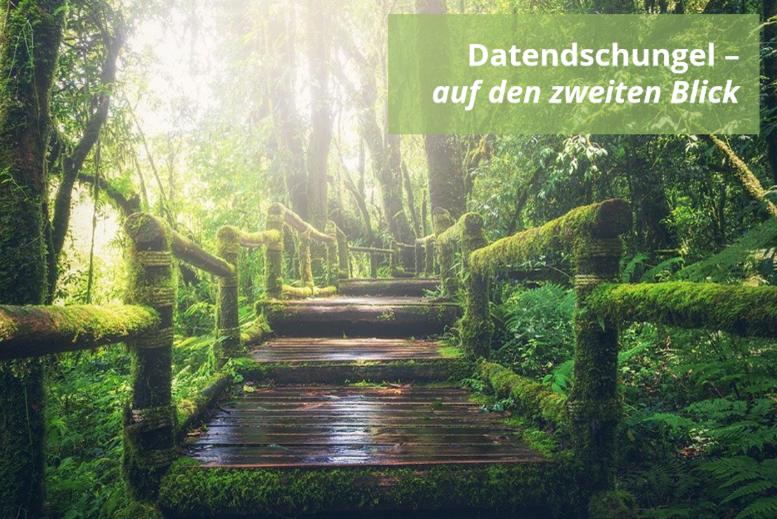 Dichter Dschungel, ein Holzweg führt durch dsa dichte Blattwerk. Das Geländer ist mit Moss bewachsen.